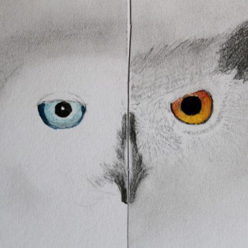Owl Series