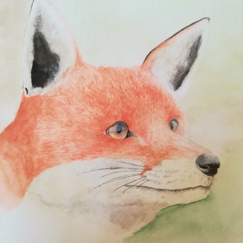 Fox Watercolour