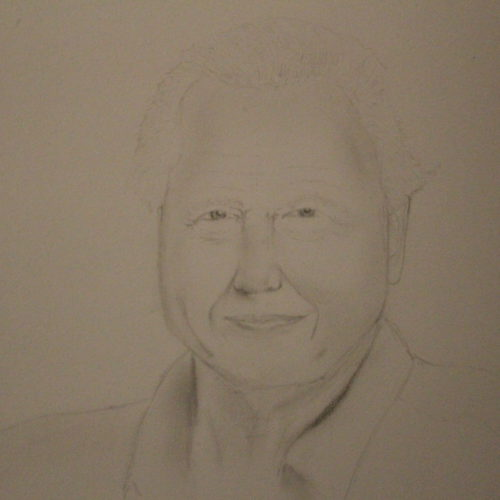 Sir David Attenborough in pencil