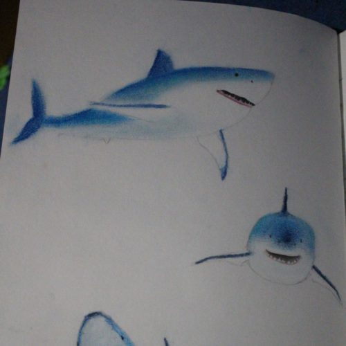 Sharks in Pastel