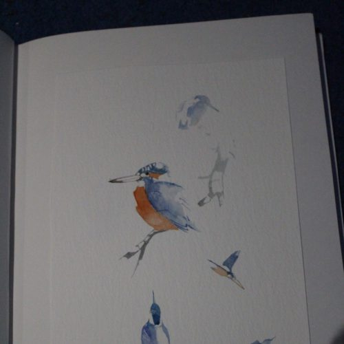 Kingfisher watercolours