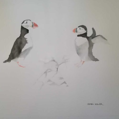 Puffins watercolour
